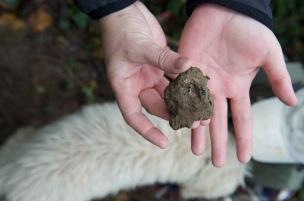 scratched black truffle