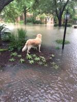 dog on her island